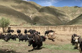A vidéki élet Tibetben